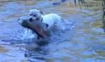 Köpeklerin Balık Avı