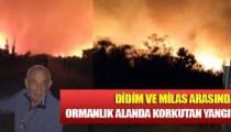 Didim ve Milas arasında ormanlık alanda korkutan yangın